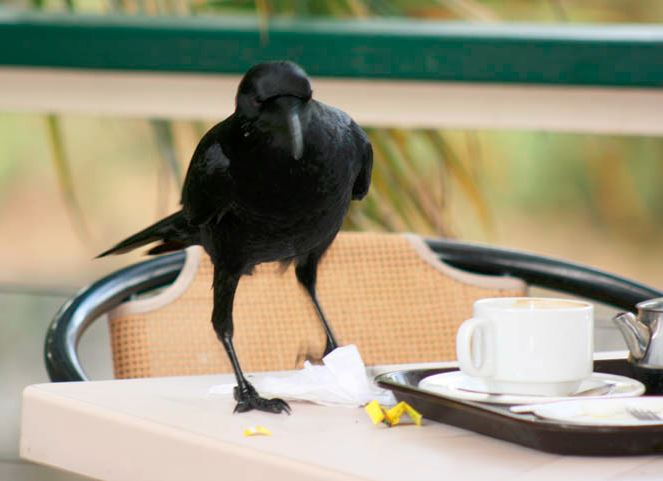 crow-coffee